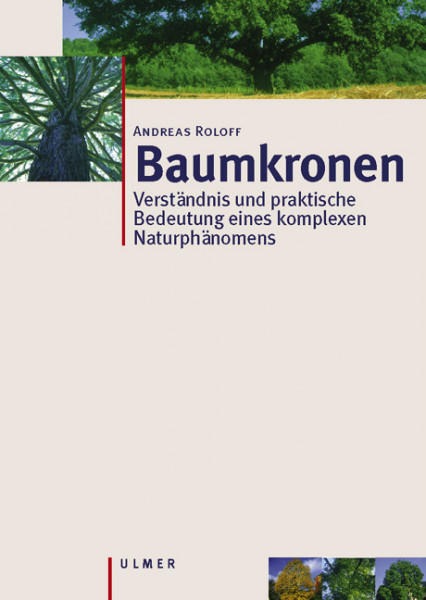 Baumkronen - Verständnis, Zusammenhänge und Anwendung